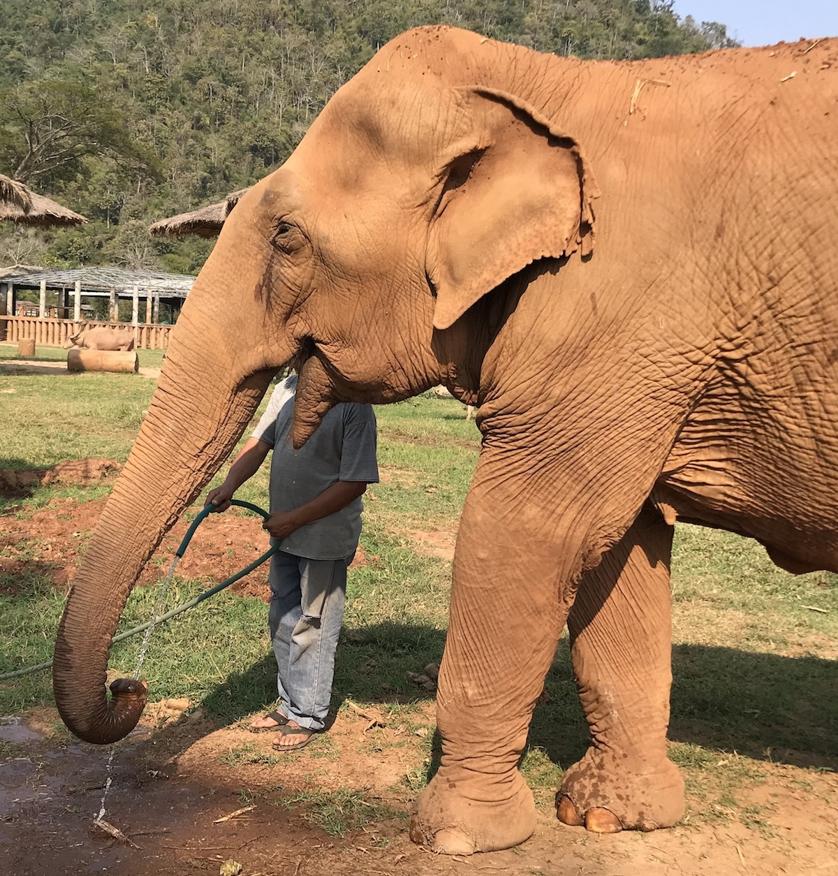 Watering the Elephant Trunk