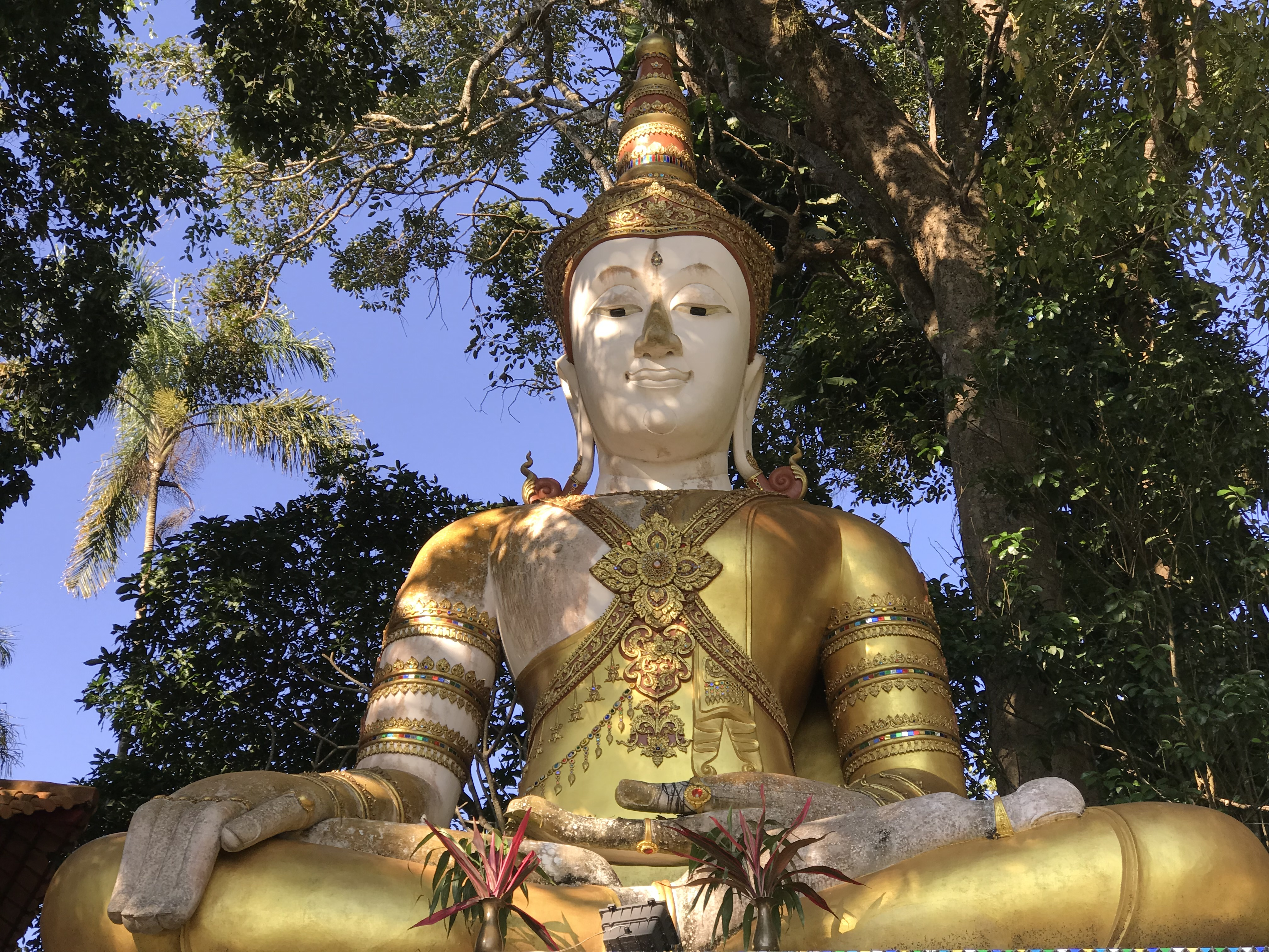 Picture of a giant gold buddha to compliment the quote from Pema
